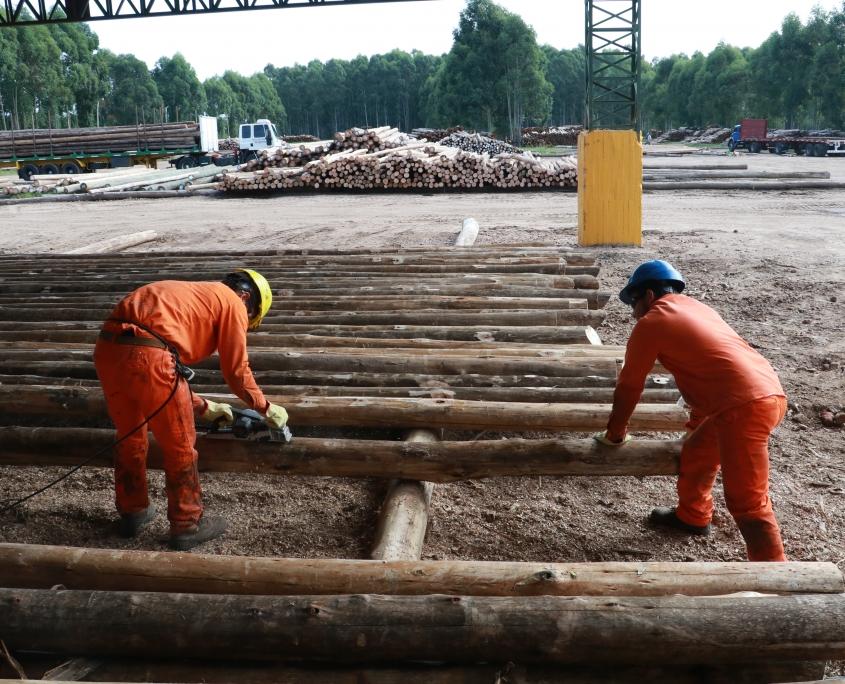 medidas postes eucaliptus